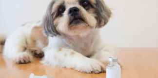 How To Take Care Of a Diabetic Dog