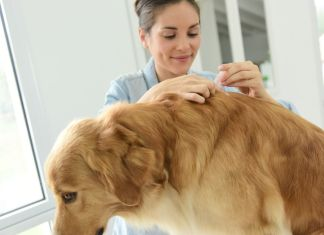 The Best Home Remedies For Fleas
