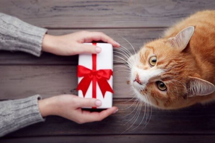 Best Gifts For Your Cat This Holiday Season