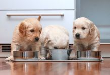 homemade food for golden retriever puppy