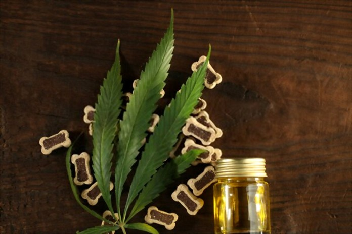 Can You Use CBD Oil for Dogs and Cats with Heart Diseases