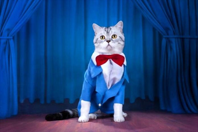 5 Most Famous Instagram Cats