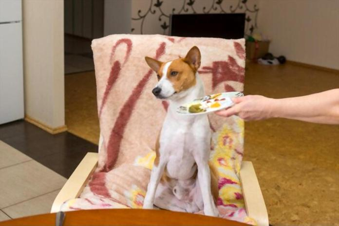 How To Get Your Dog Eat When They Are Being Picky