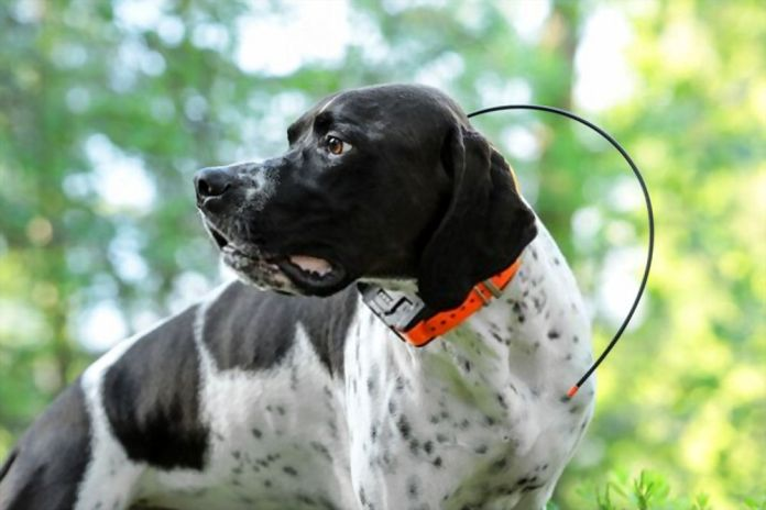Why Should You Track Dogs with GPS Collars?