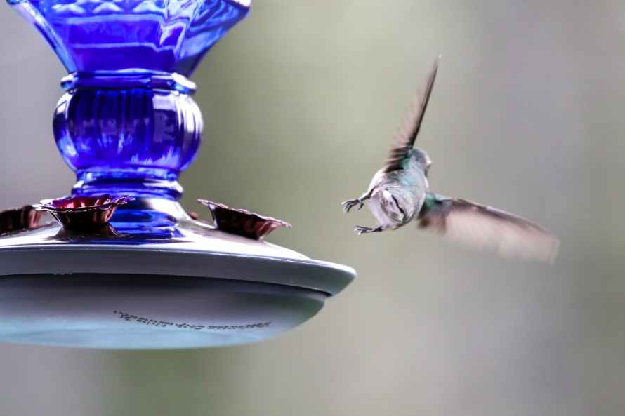 time lapse photography of hummingbird flying