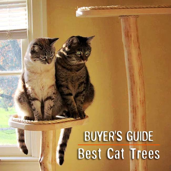 Best Cat Trees and Scratching Posts Reviews Top 10 2018