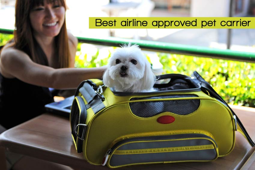 10 Best Airline Approved Pet Carriers for Dogs and Cats