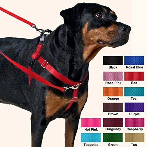 Freedom Non Pull Dog Harness Review My Guide  Video and More