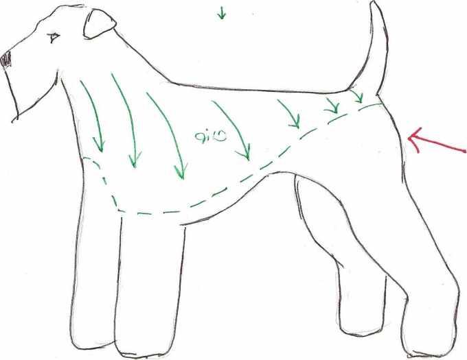 Airedale Terrier Grooming Pattern