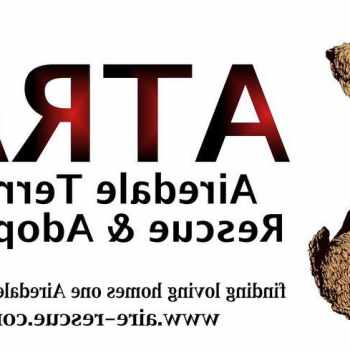 Airedale Terrier Rescue Colorado