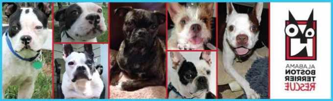 Alabama Boston Terrier Rescue