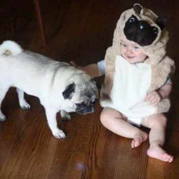 Baby Pug Costume