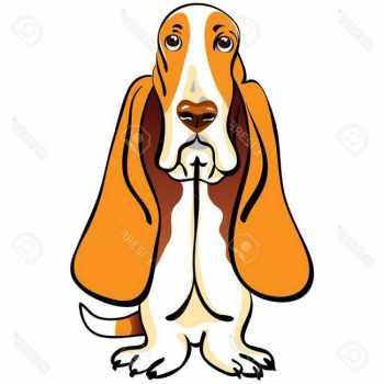 Basset Hound Clipart