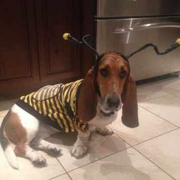 Basset Hound Costumes For Sale