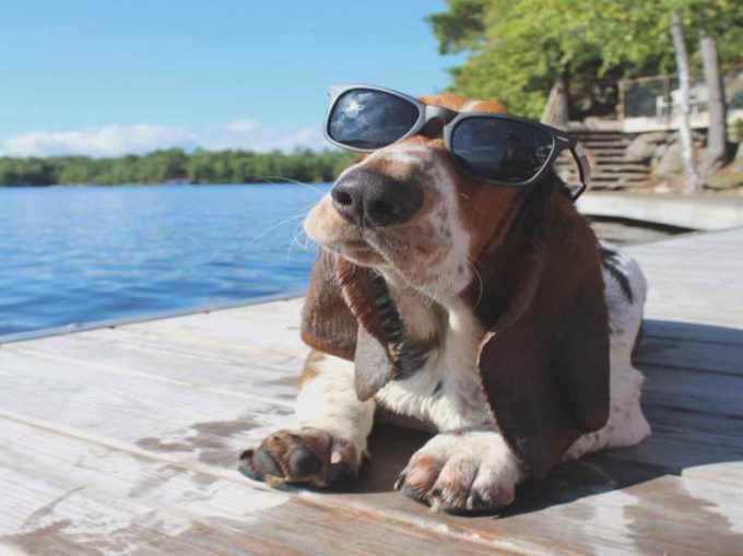 Basset Hound Puppies Louisiana