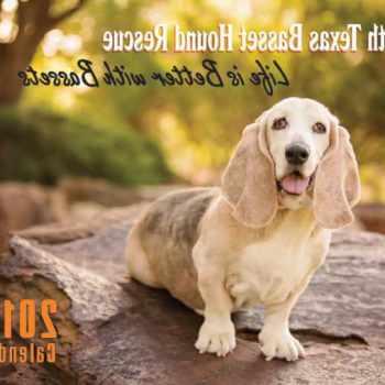 Basset Hound Rescue Dallas