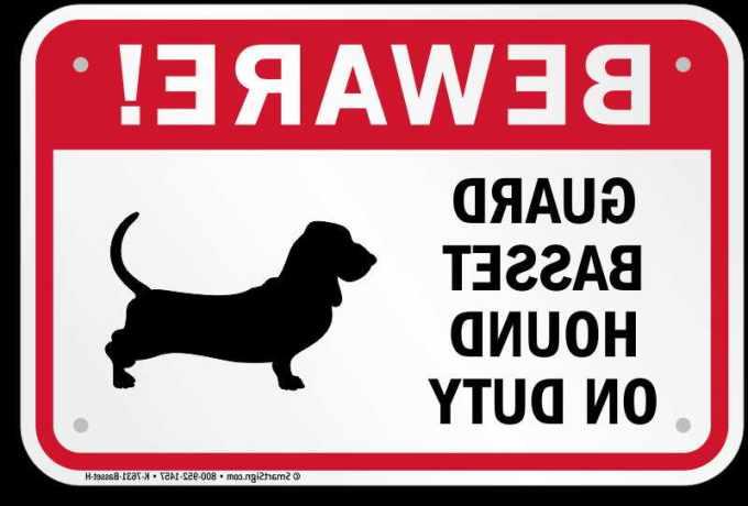 Basset Hound Signs