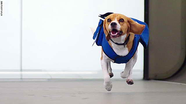 Beagle Items