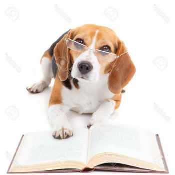 Beagle Legal