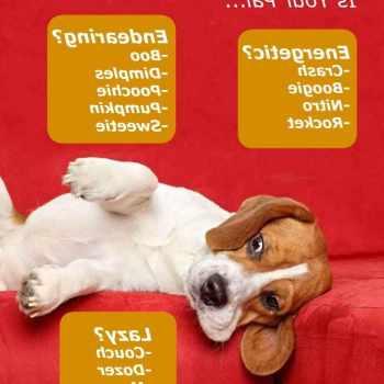 Beagle Puppy Names Girl
