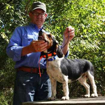 Beagle Tracking Collars