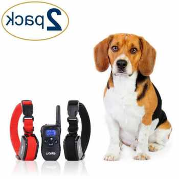 Best Bark Collar For Beagle