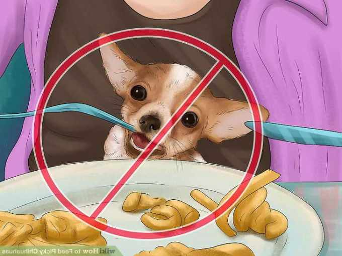 Best Dog Food For Picky Chihuahua