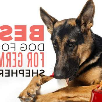 Best Food For German Shepherd With Allergies