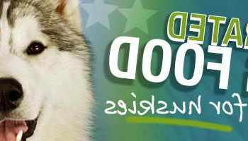 Best Food For Siberian Husky