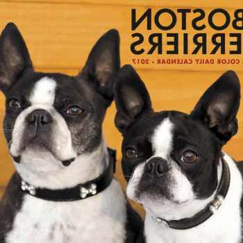 Boston Terrier Calendar