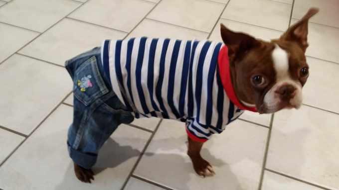 Boston Terrier Clothing For Dog