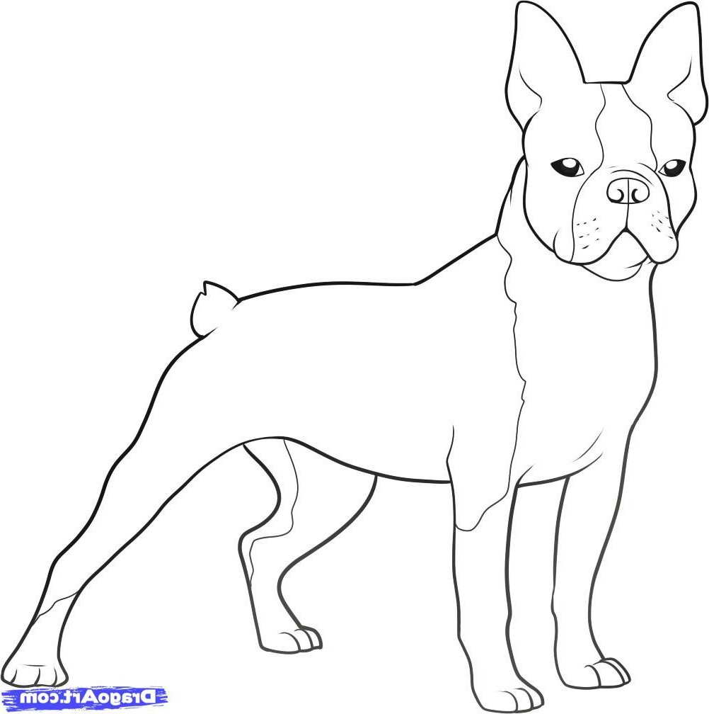 Boston Terrier Coloring Pages Ofertasvuelo