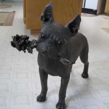 Boston Terrier For Sale In Ohio