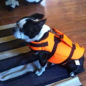 Boston Terrier Jackets