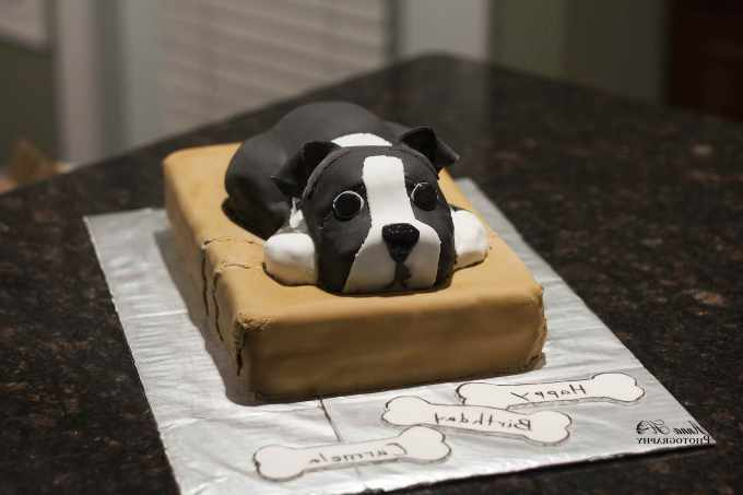 Boston Terrier Party Supplies