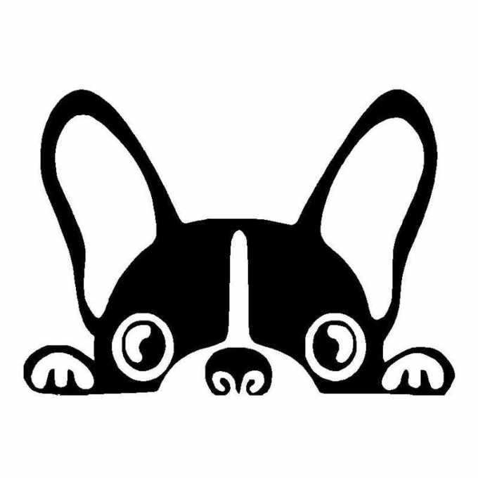 Boston Terrier Stickers For Cars