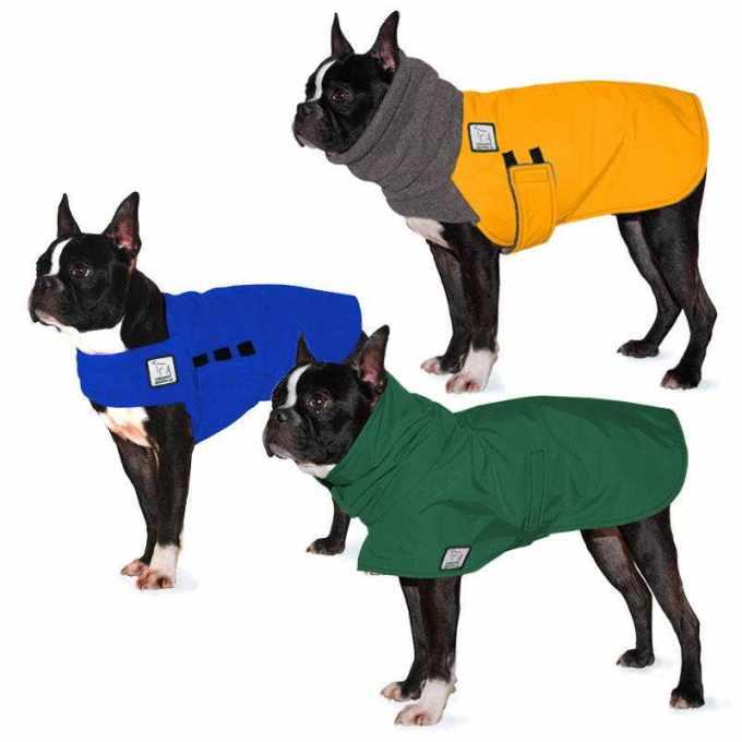 Boston Terrier Winter Coat