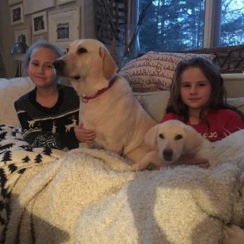 Brookline Labrador Retriever Rescue