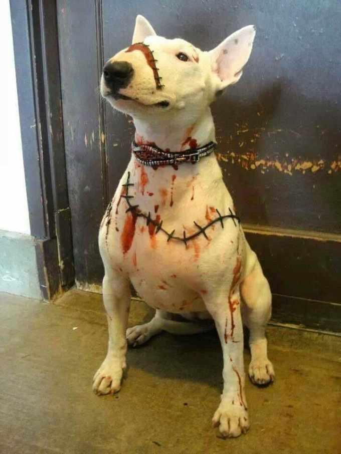 Bull Terrier Costume