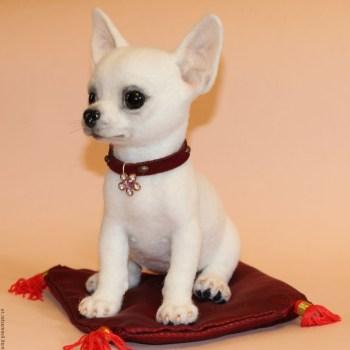 Buy Chihuahua