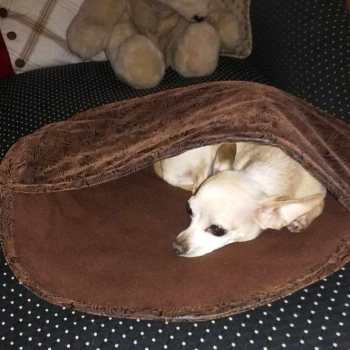 Chihuahua Bed