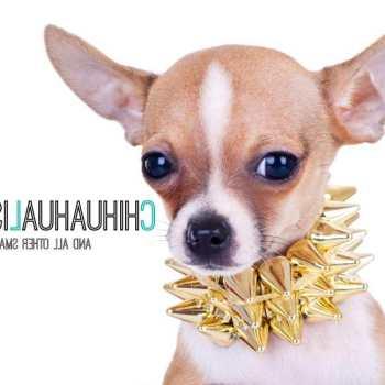 Chihuahua Dog Collar