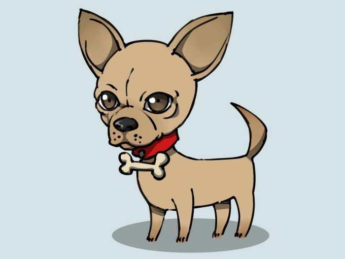 Chihuahua Dog Drawings