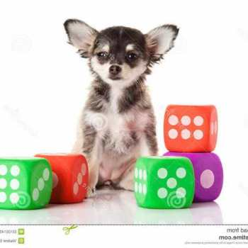 Chihuahua Games Free