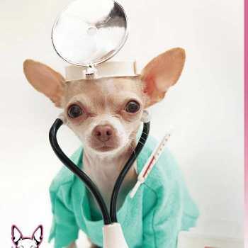 Chihuahua Health Care
