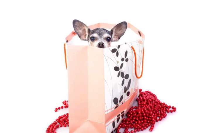 Chihuahua Lovers Gifts