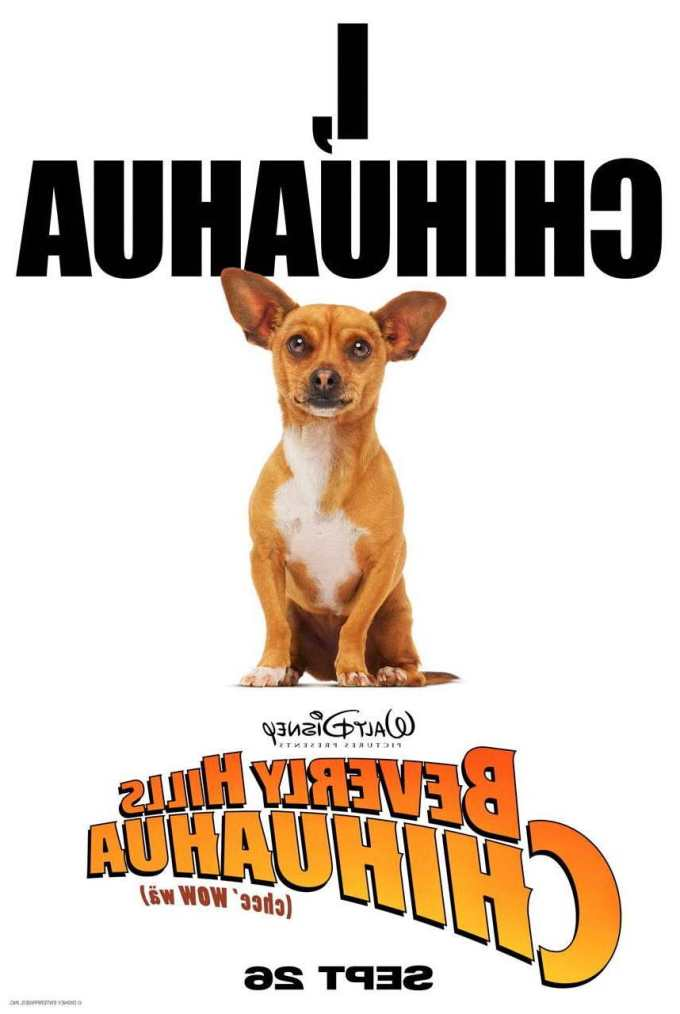 Chihuahua Posters