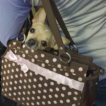 Chihuahua Purse