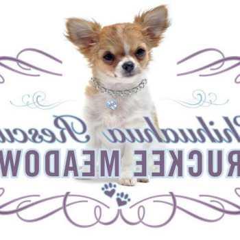 Chihuahua Rescue Organization