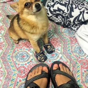 Chihuahua Sandals
